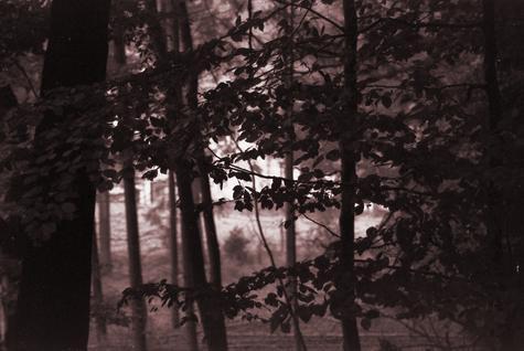 Der Wald auf Hartkopsbever