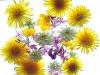 Fruehlingsblumen_525