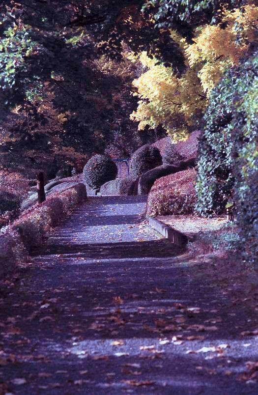 Herbstfarben Aufgenommen mit Kodak Ektar 100