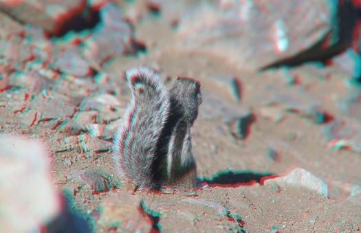 Die dritte Dimension: Foto in 3D